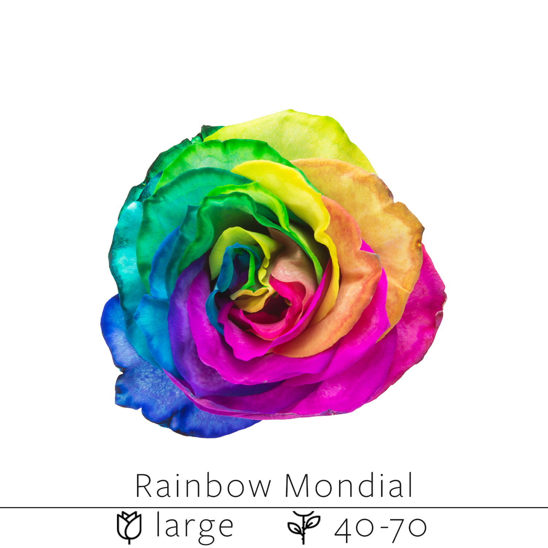 Rainbow Mondial.jpg