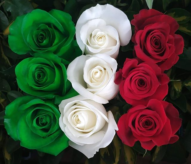 Add a pop of custom dyed roses to celebrate your country, team, school or company in style ❤️💚❤️ #roses #cananvalle #ecuadorianroses #farmdirect #freshflowers #dyedroses