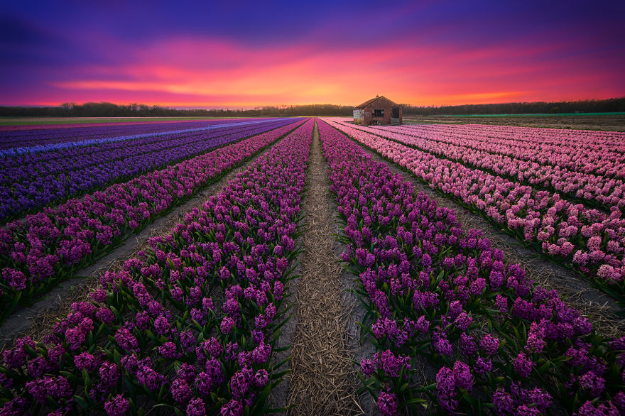 my-home-the-netherlands-in-40-beautiful-photos-26__880.jpg