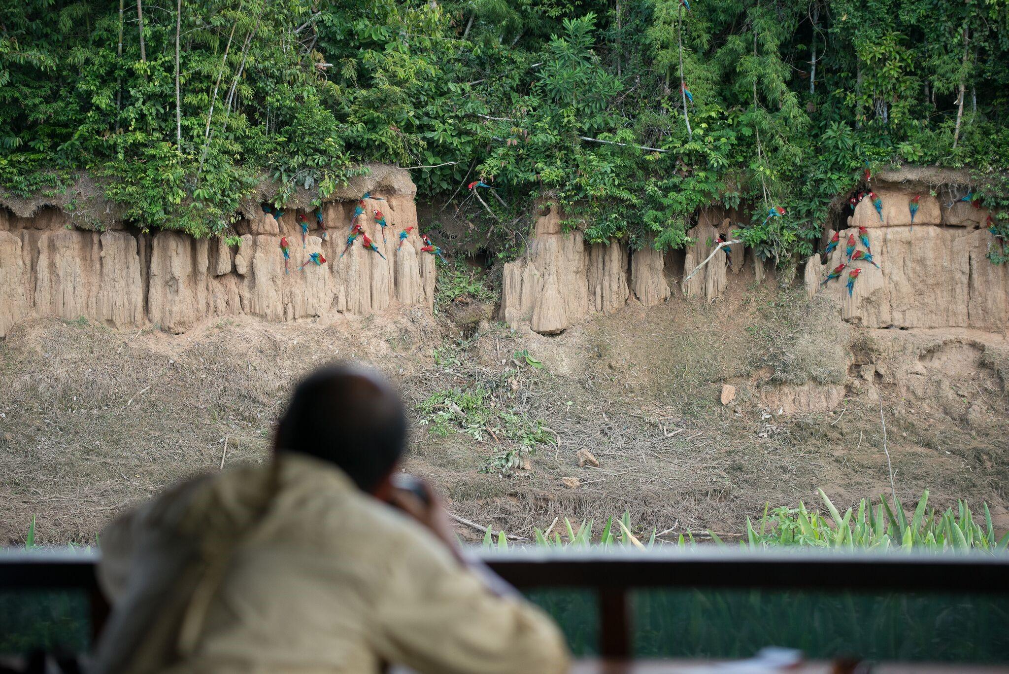 Birding in Tambo Blanquillo Lodge – Photo: Alfredo Fernández
