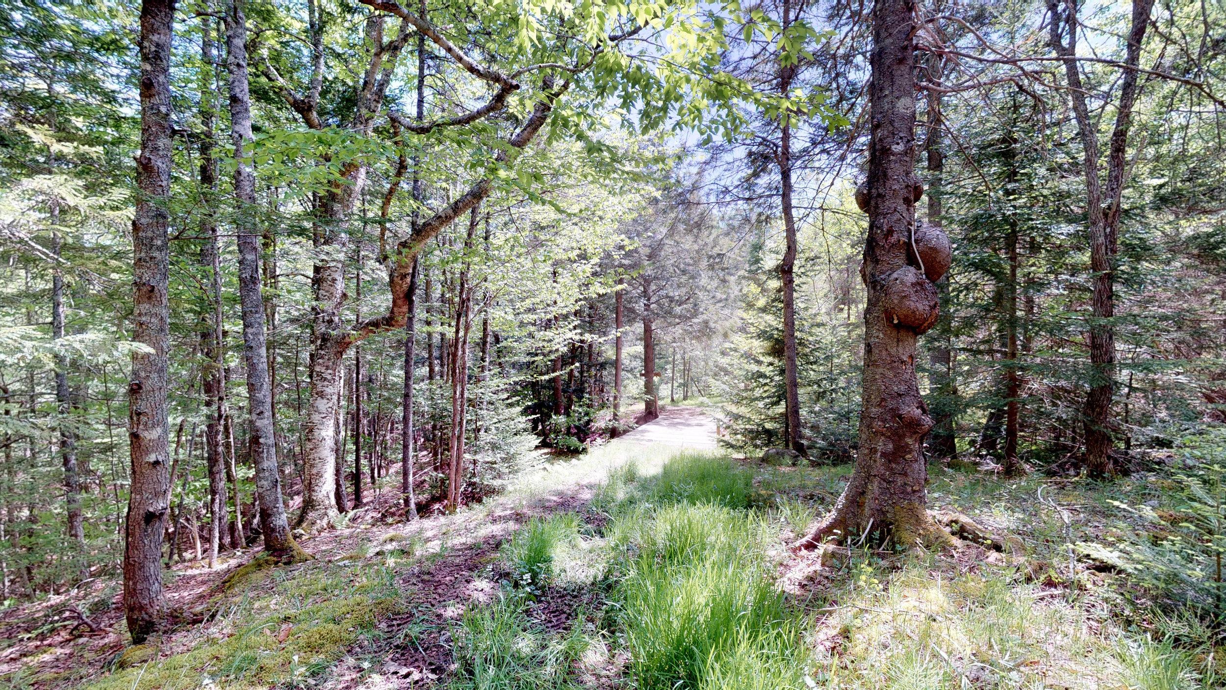 Hemlock Haven Trail.jpg