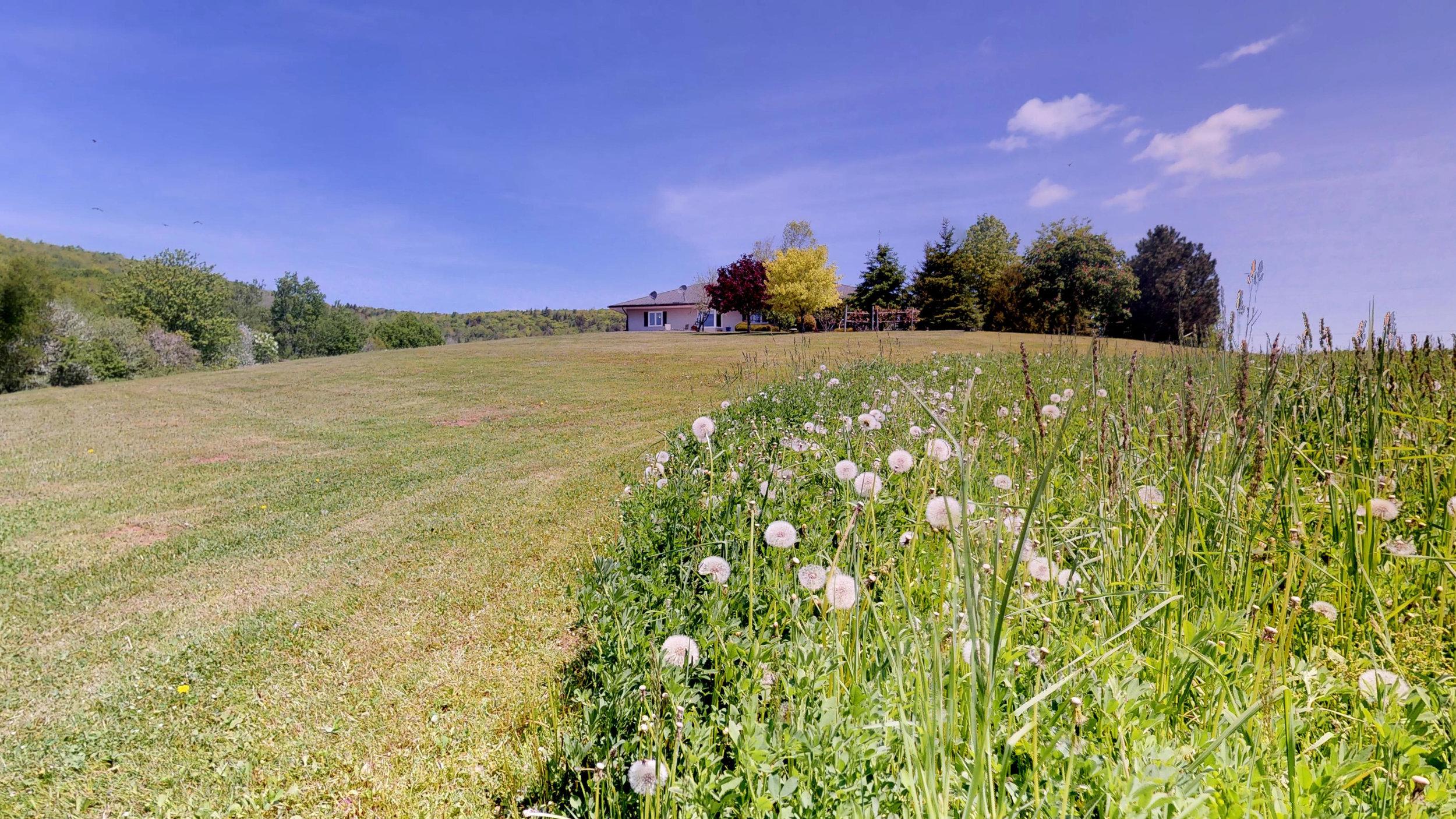 Back Lawn & Field(1).jpg