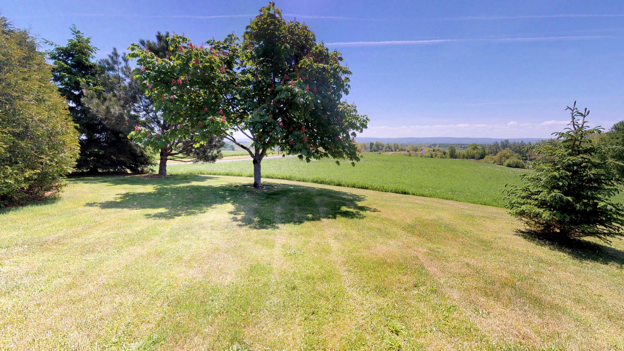 Back Lawn & Field(4).jpg