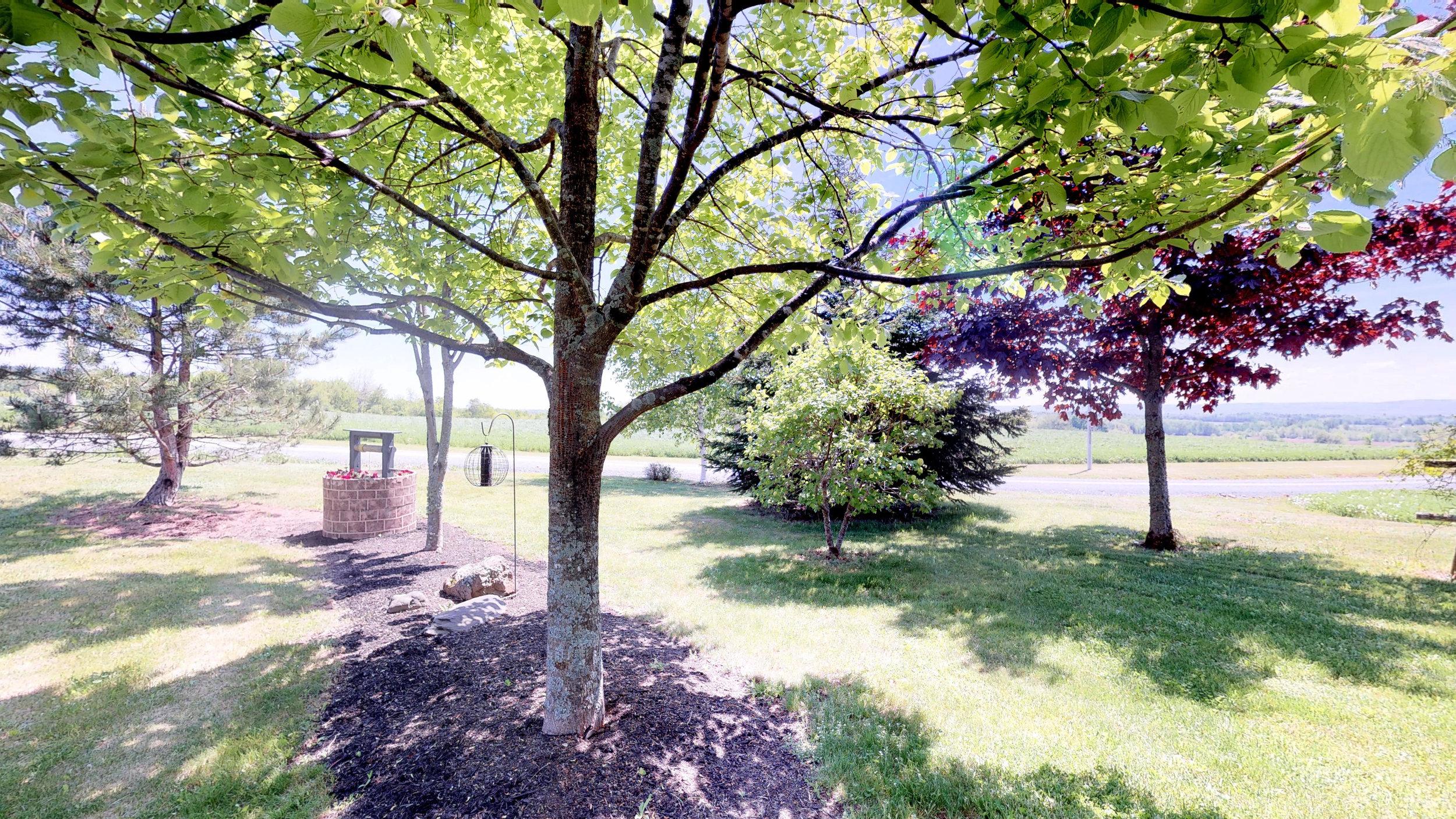 Back Lawn & Field(5).jpg