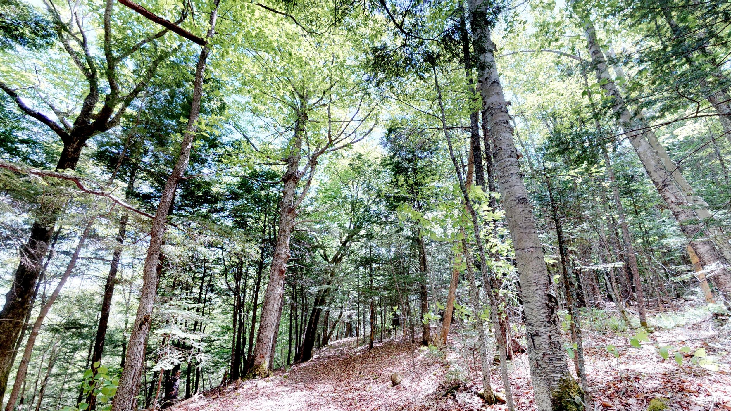 Beach Ridge Trail.jpg