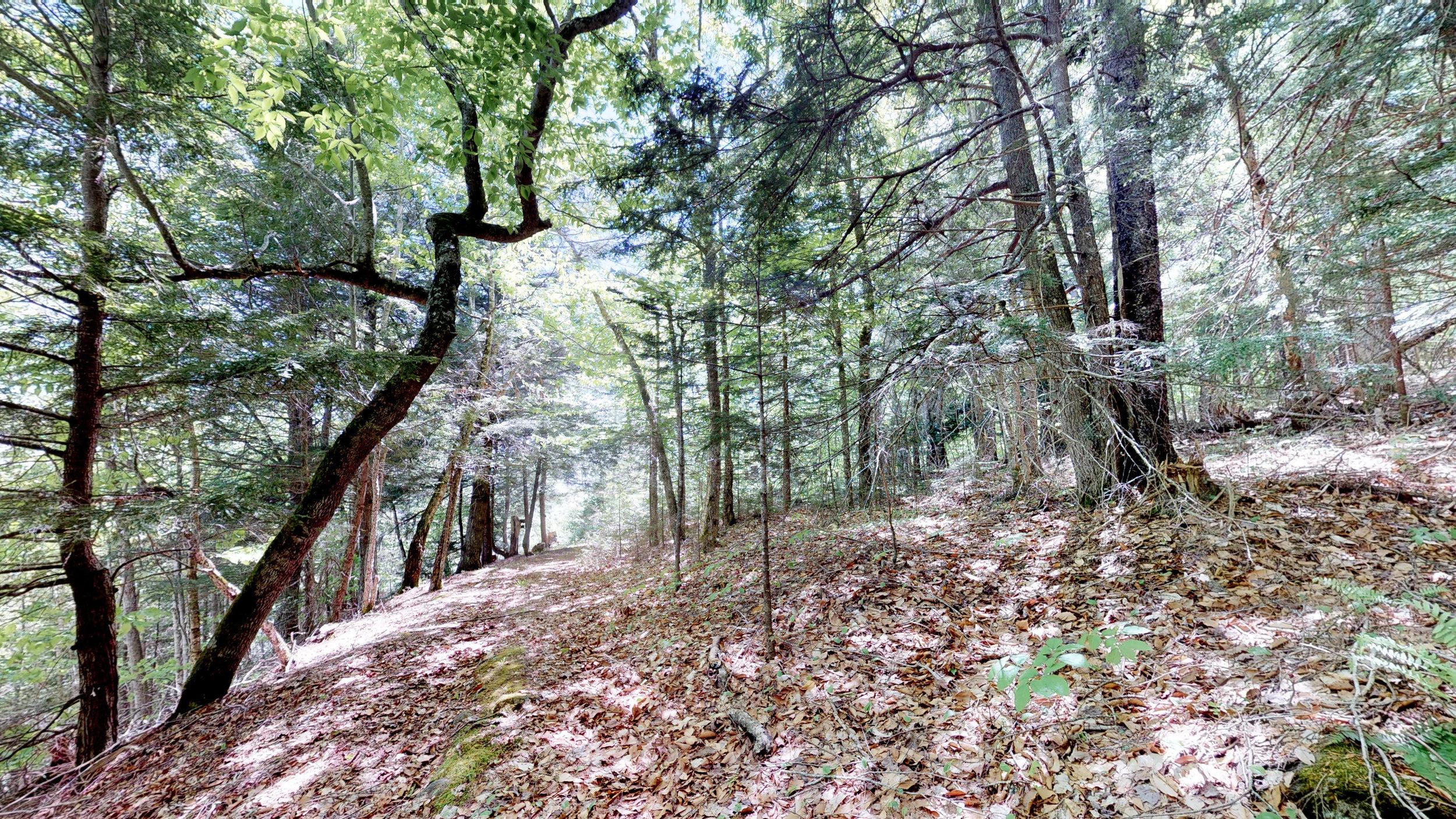 Beach Ridge Trail(1).jpg