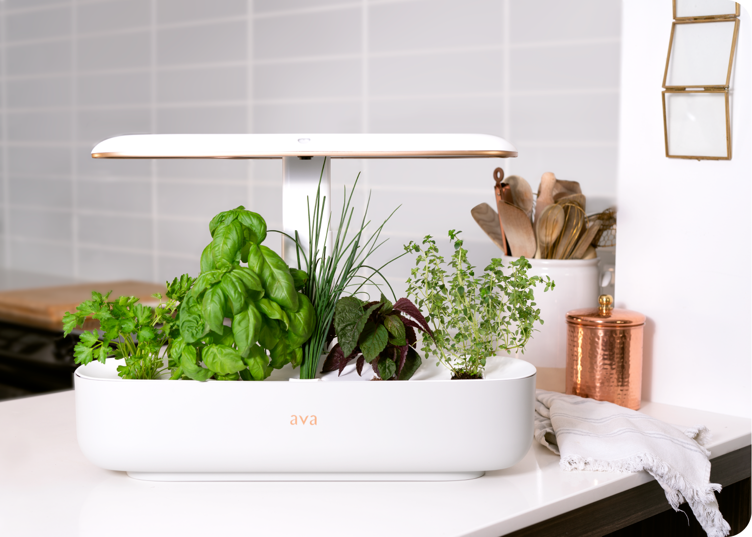 Automated gardening, naturally. - Ready-to-grow, soil-free compostable pods include everything needed for a plant to thrive. The pre-seeded plant pods are simply plug-and-play, and AVA Byte knows when to water or when to give a little light.