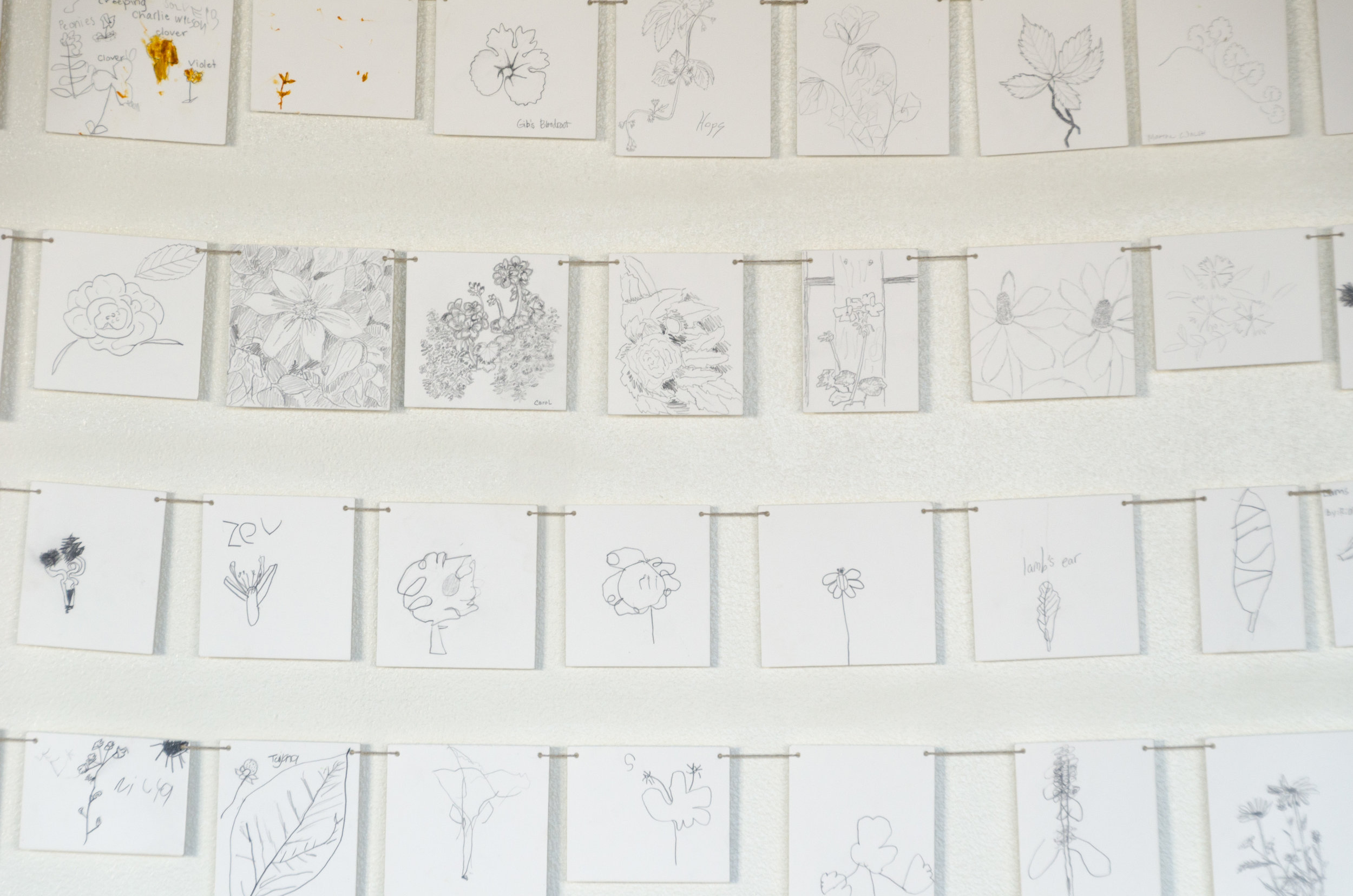Garden drawings 2016