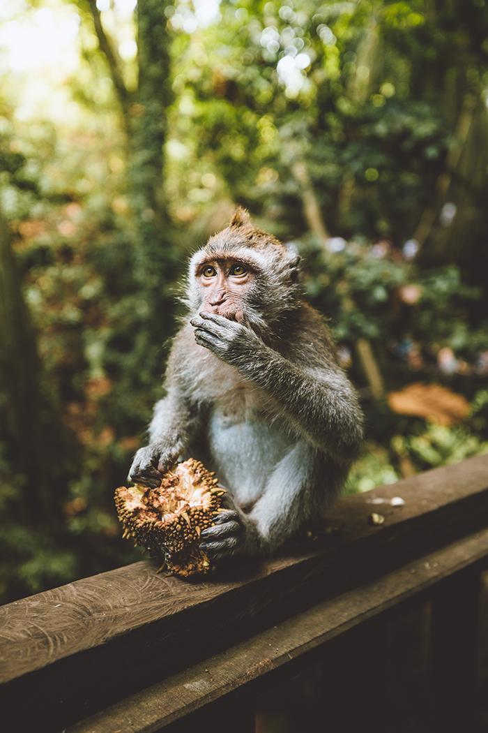 Scared Monkey Forest .jpg