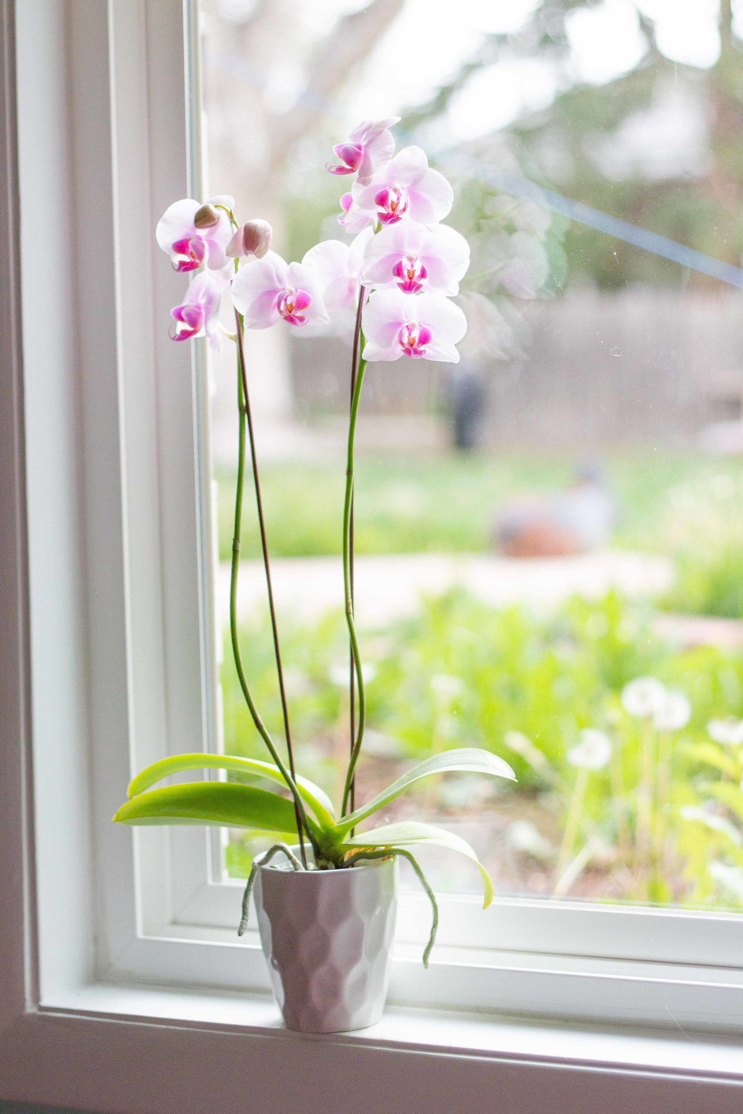 Orchids are not as hard to grow as you may think!