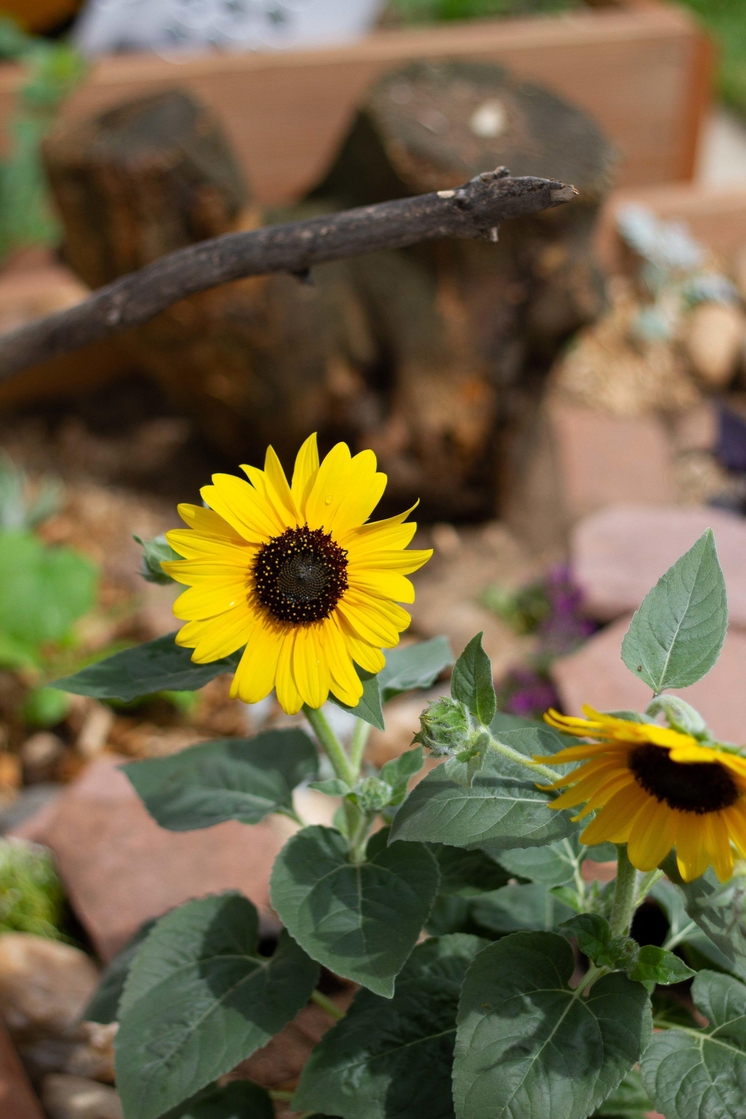 dino garden-5626.jpg