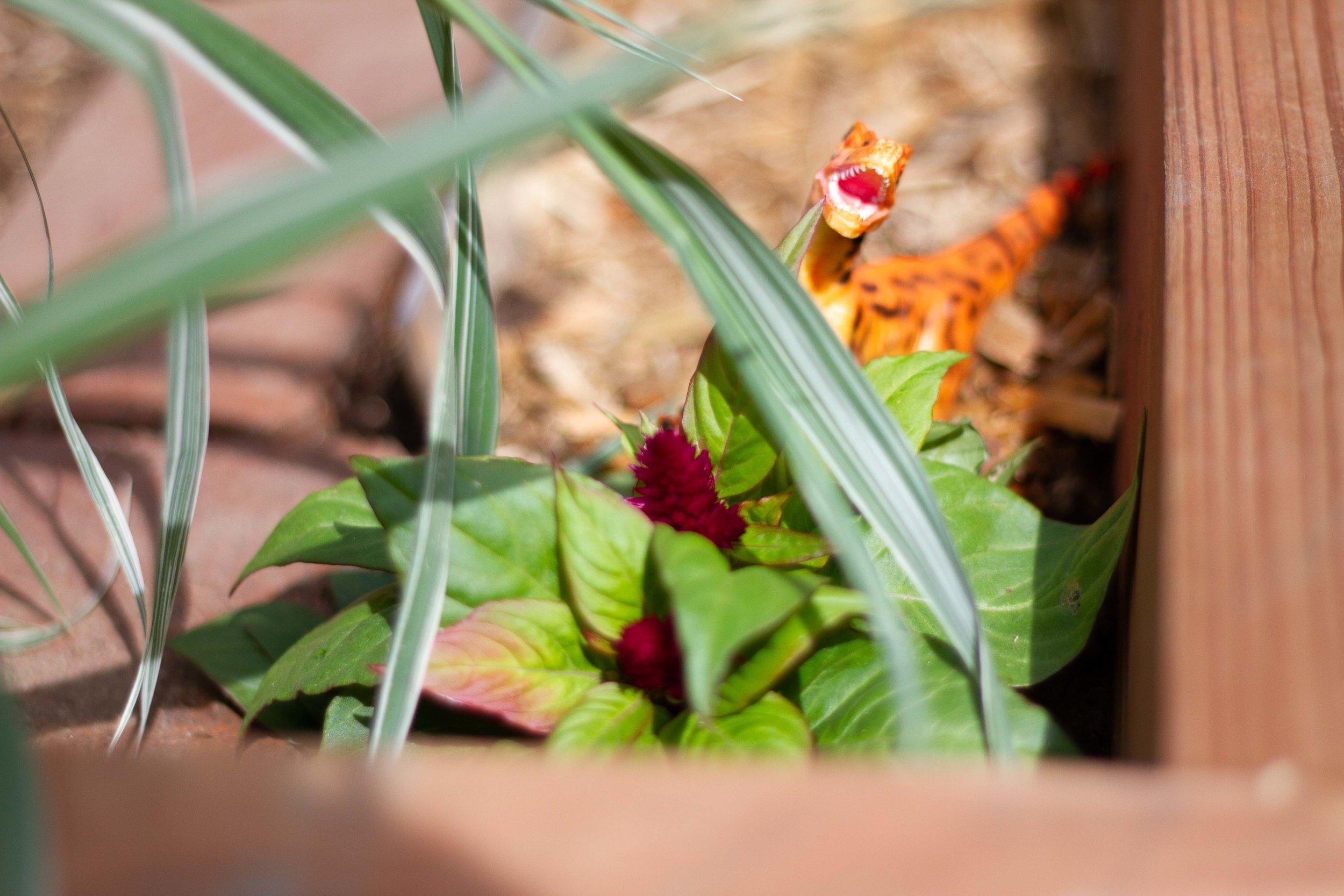 dino garden-5749.jpg