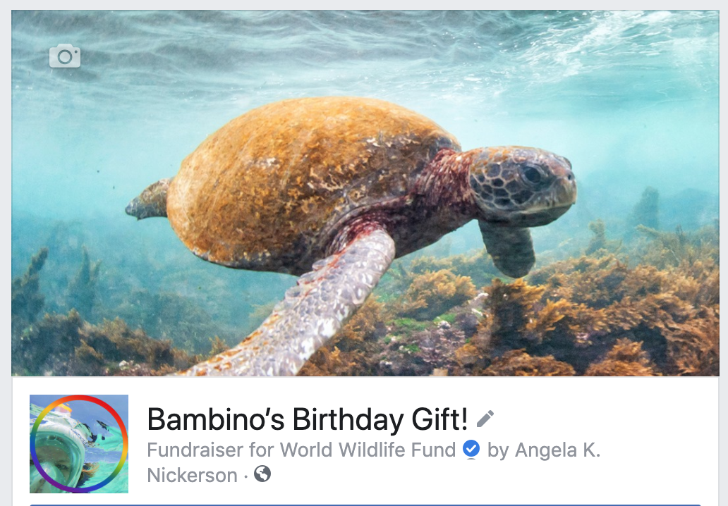 Bambino's Birthday Giving! - Join us in supporting the World Wildlife Fund in honor of Bambino's birthday!