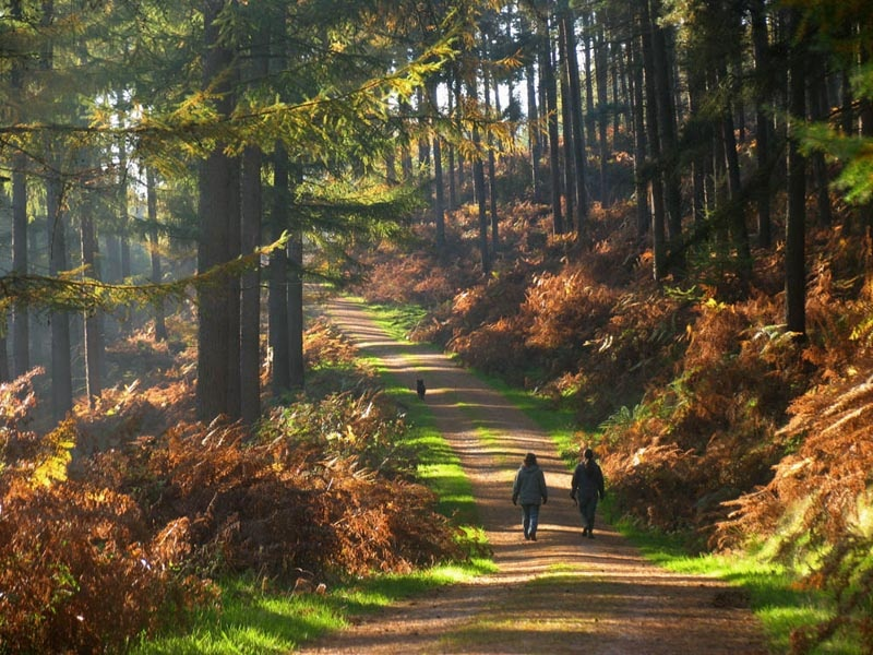 Cannock Chase - Cannock Chase Forest, Birches Valley, Rugeley, WS15 2UQhttps://www.forestryengland.uk/cannock-chase-forest