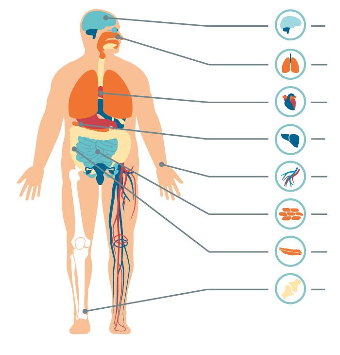 IMPORTANTE:  El sobrepeso puede afectar múltiples órganos y funciones del organismo, que pueden significar distintas complicaciones o enfermedades.