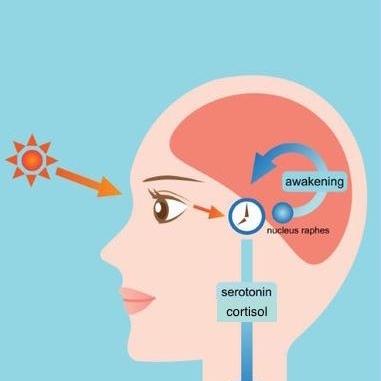 inkl.cortisol.jpeg