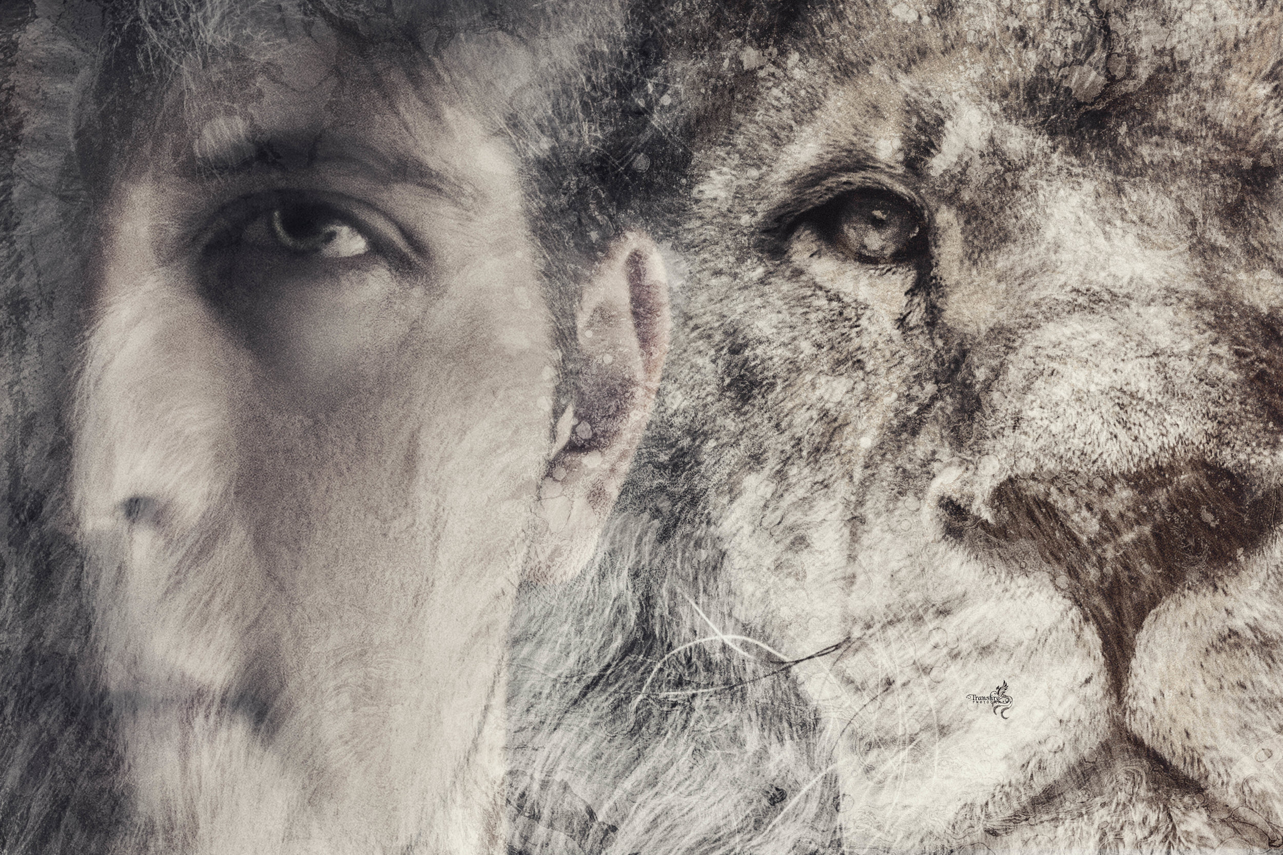AndyLion3.jpg