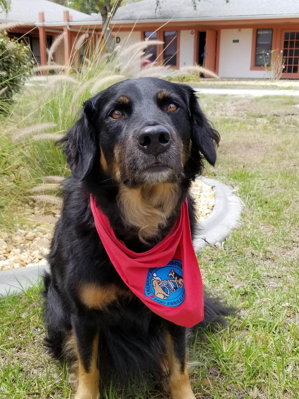 Boone dog.jpg