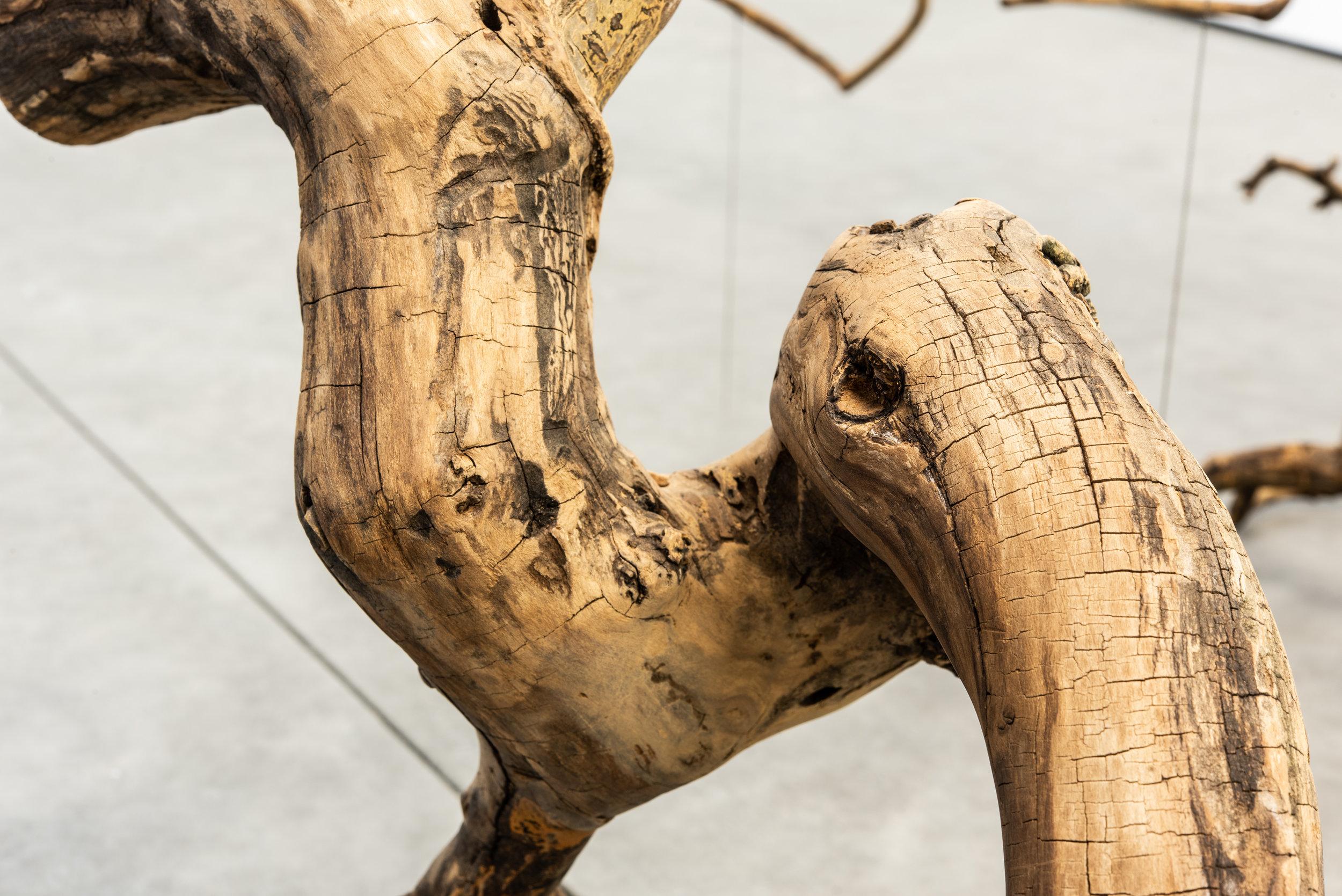 Stephen Lichty,  Branch