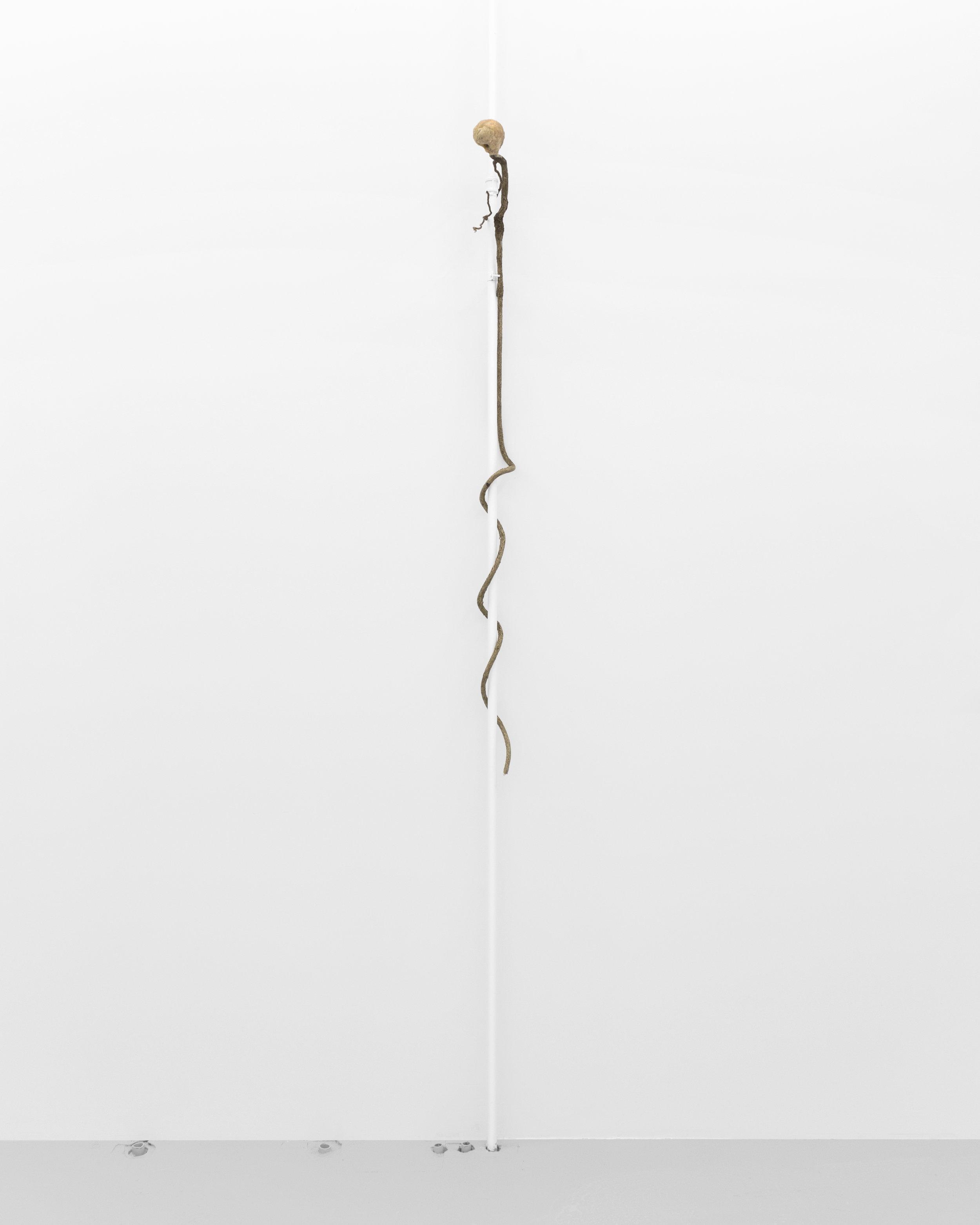 Kira Scerbin,  My First Smell , 2019. Beeswax and myrrh on stick