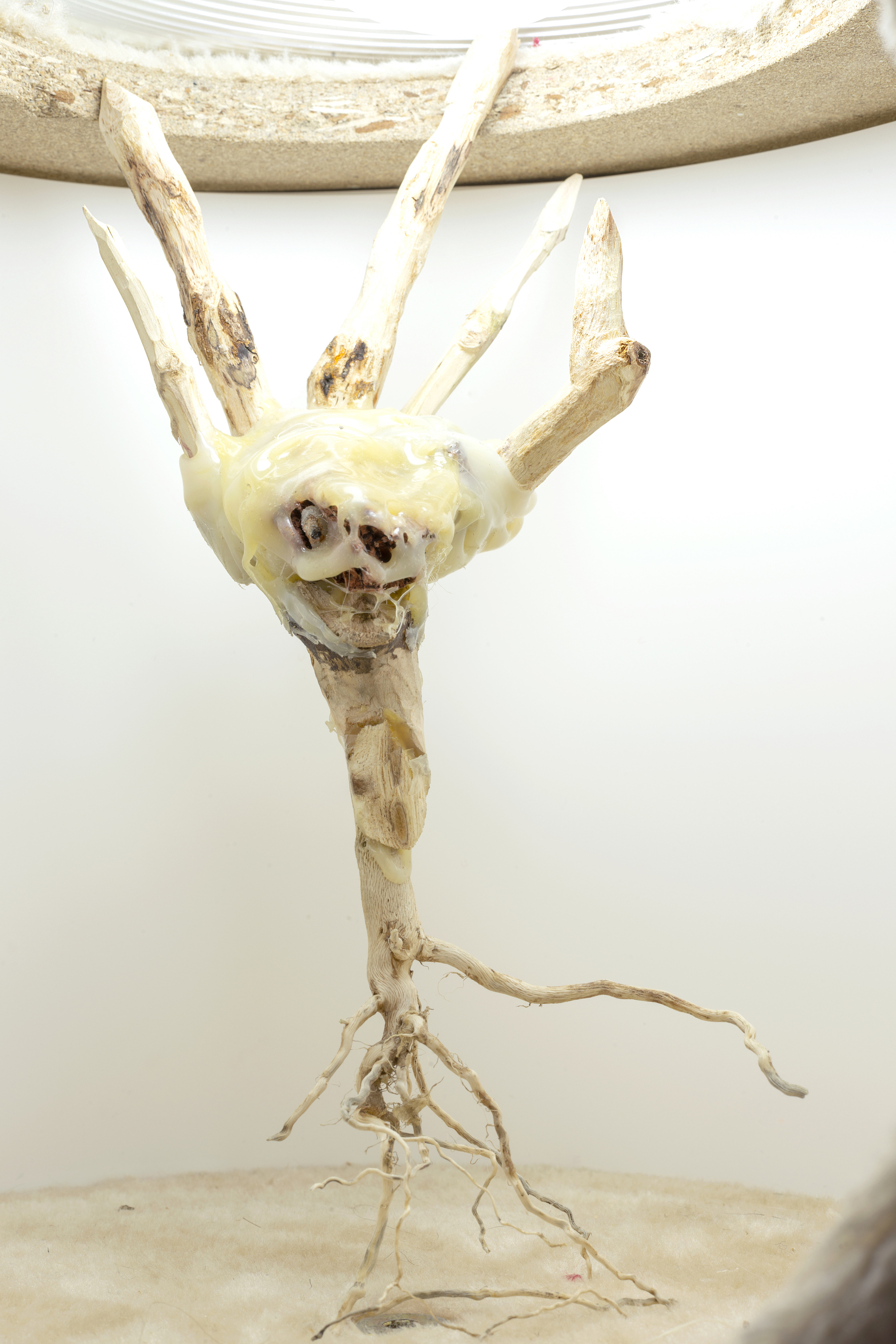 Kira Scerbin,  Baby brain stem , 2019, mixed media, 9 x 5 x 4 inches