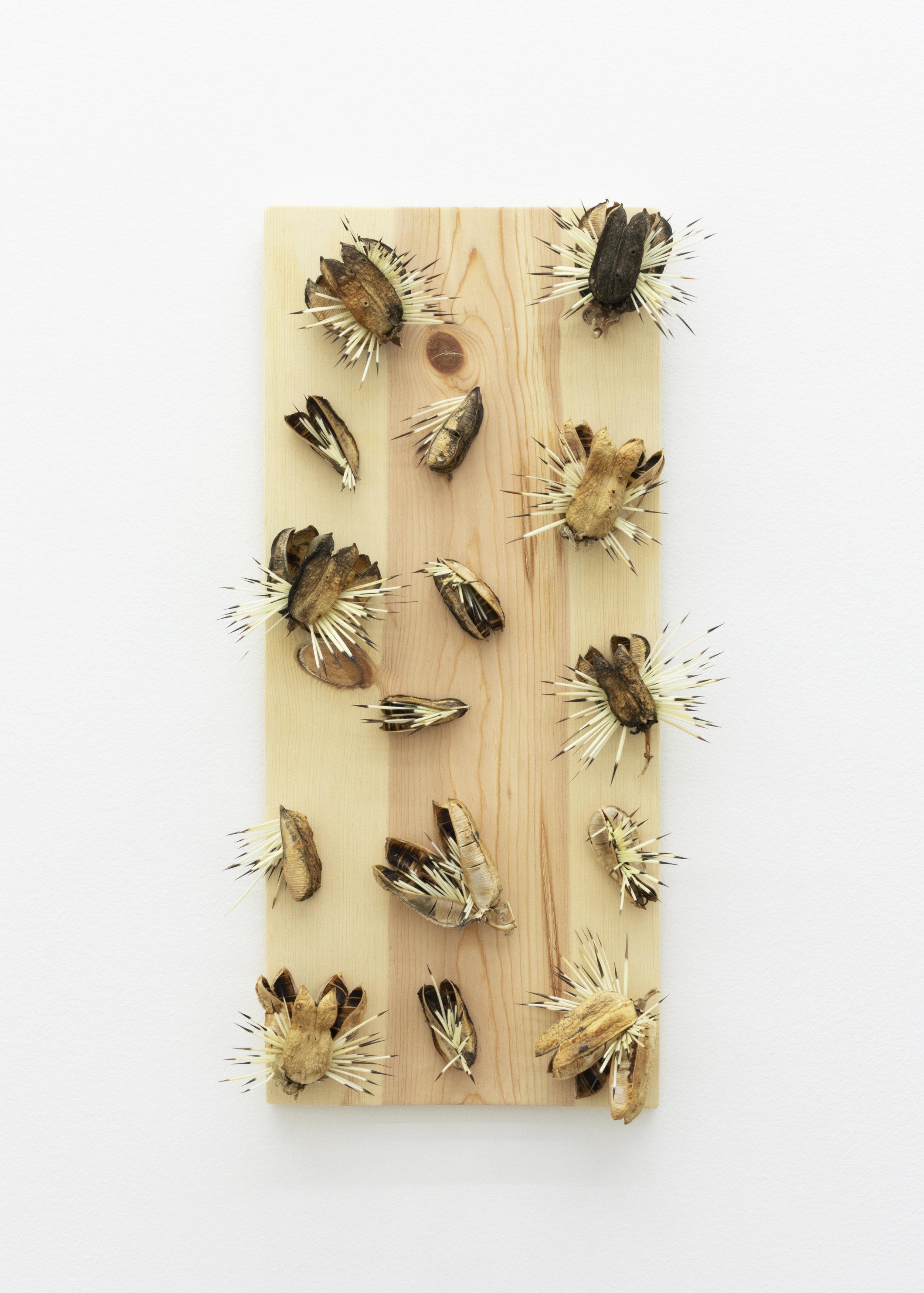 Haashk'aanz,  2019, porcupine quills, Rez wood, yucca fruit pods, 21 x 12 x 4