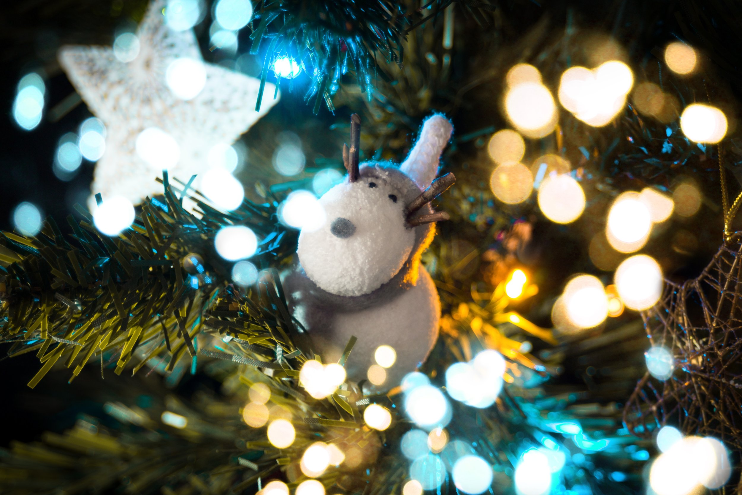 See the Reindeer -