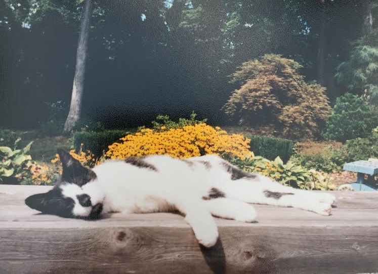 Founder's childhood cat, Patches