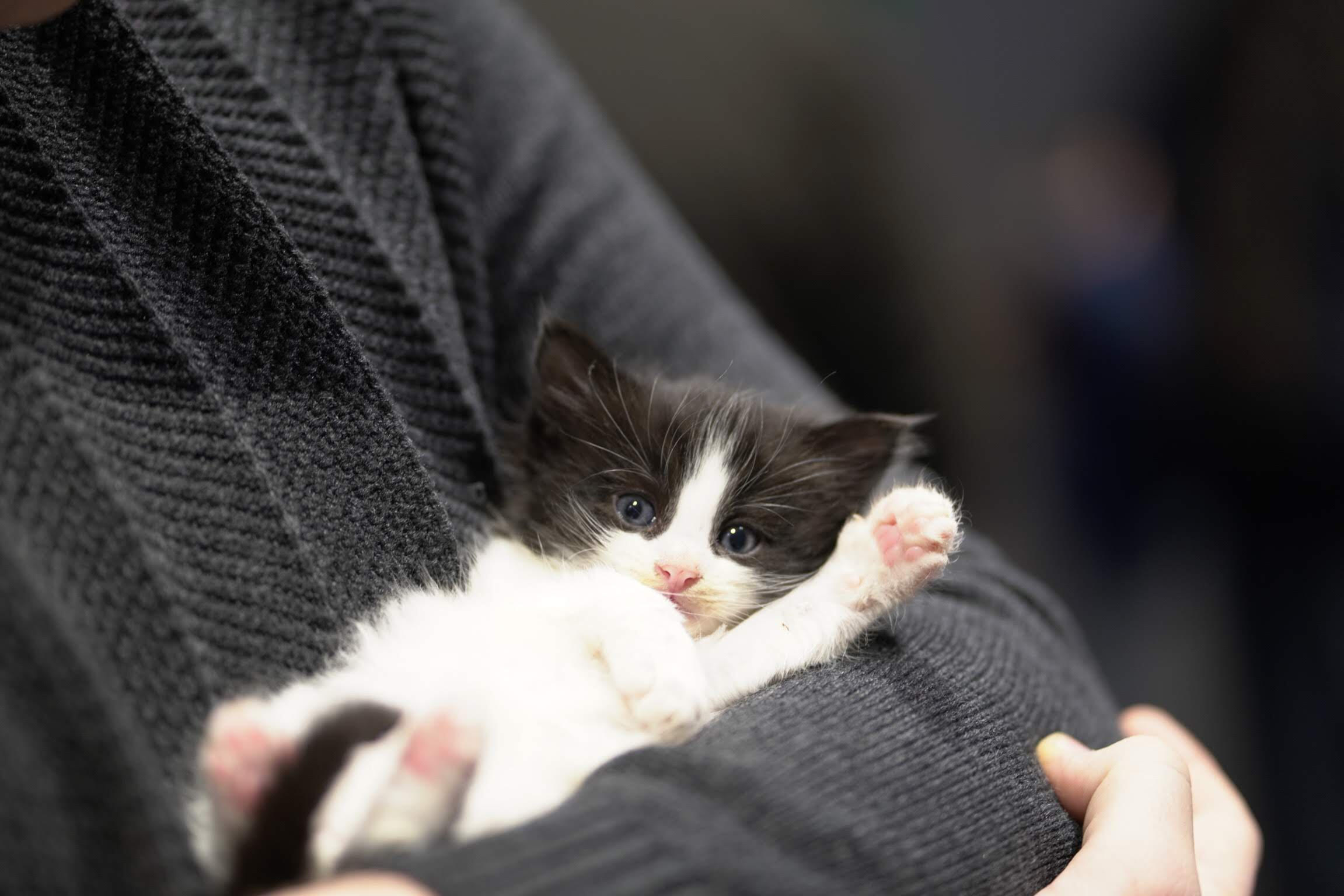We are on a mission to save homeless, sick and dying animals. - Will you help us?
