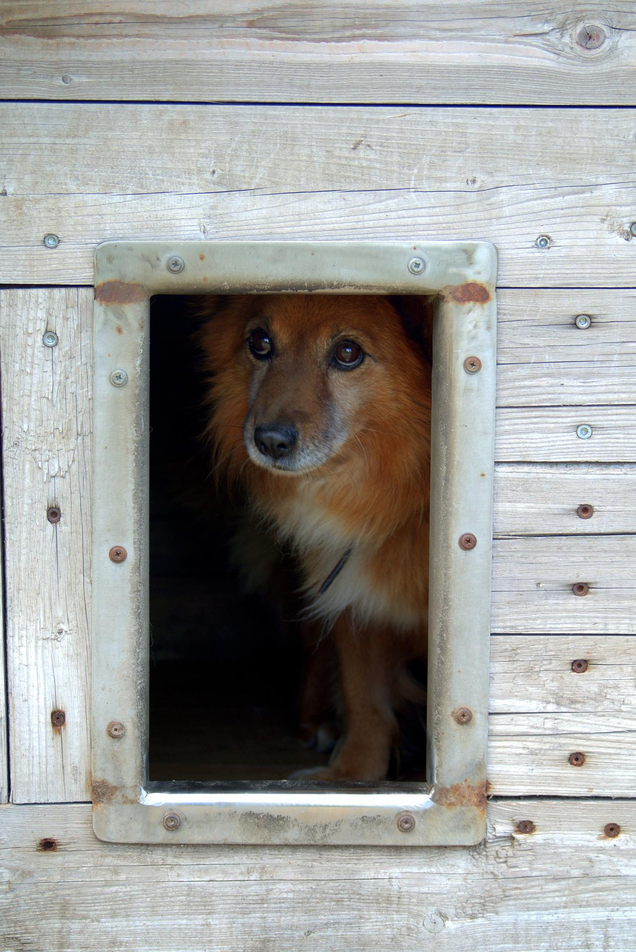 animal-shelter-1558655_1920.jpg