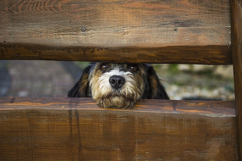 dog-1340327 - copie.jpg