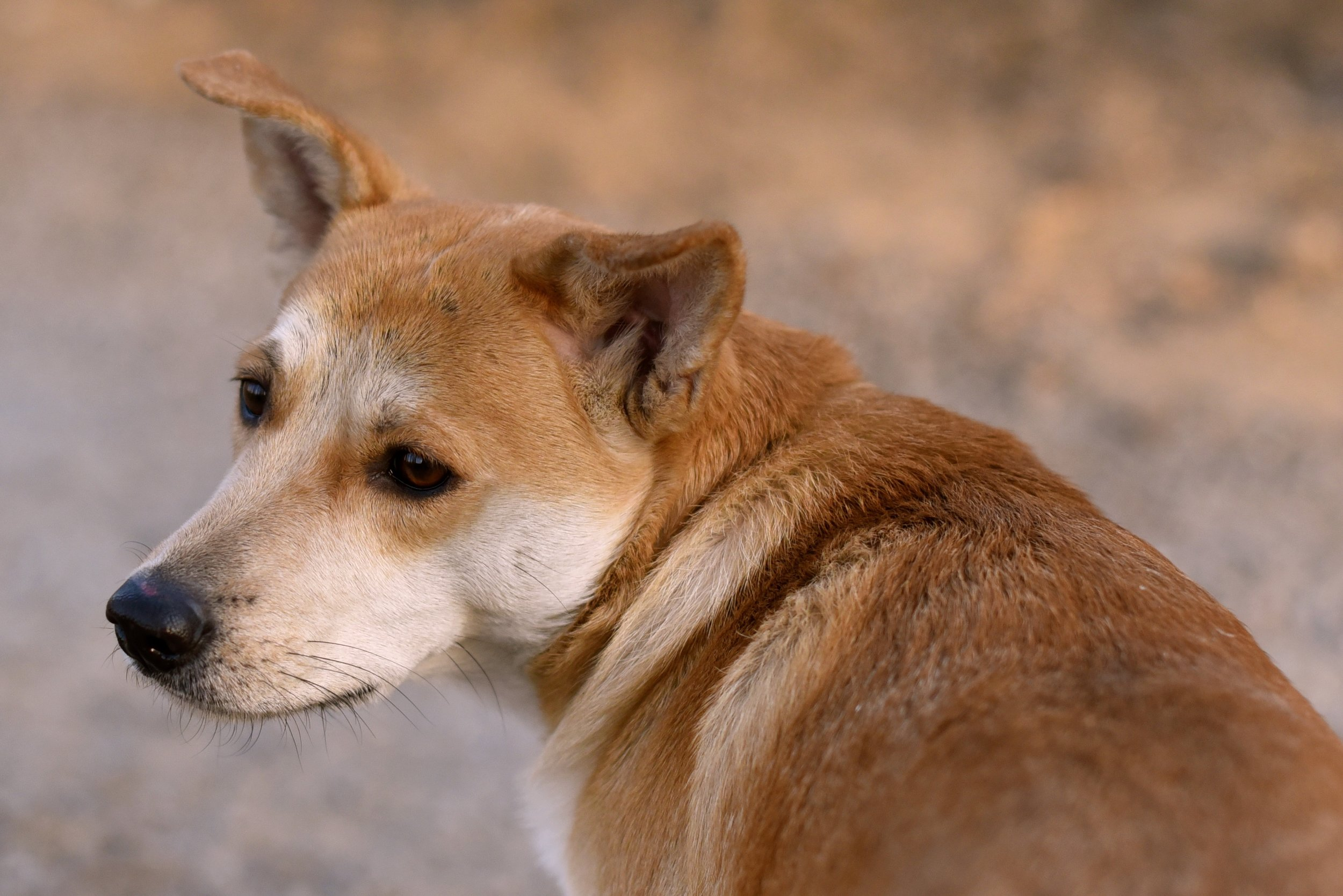 doggy-1057684.jpg