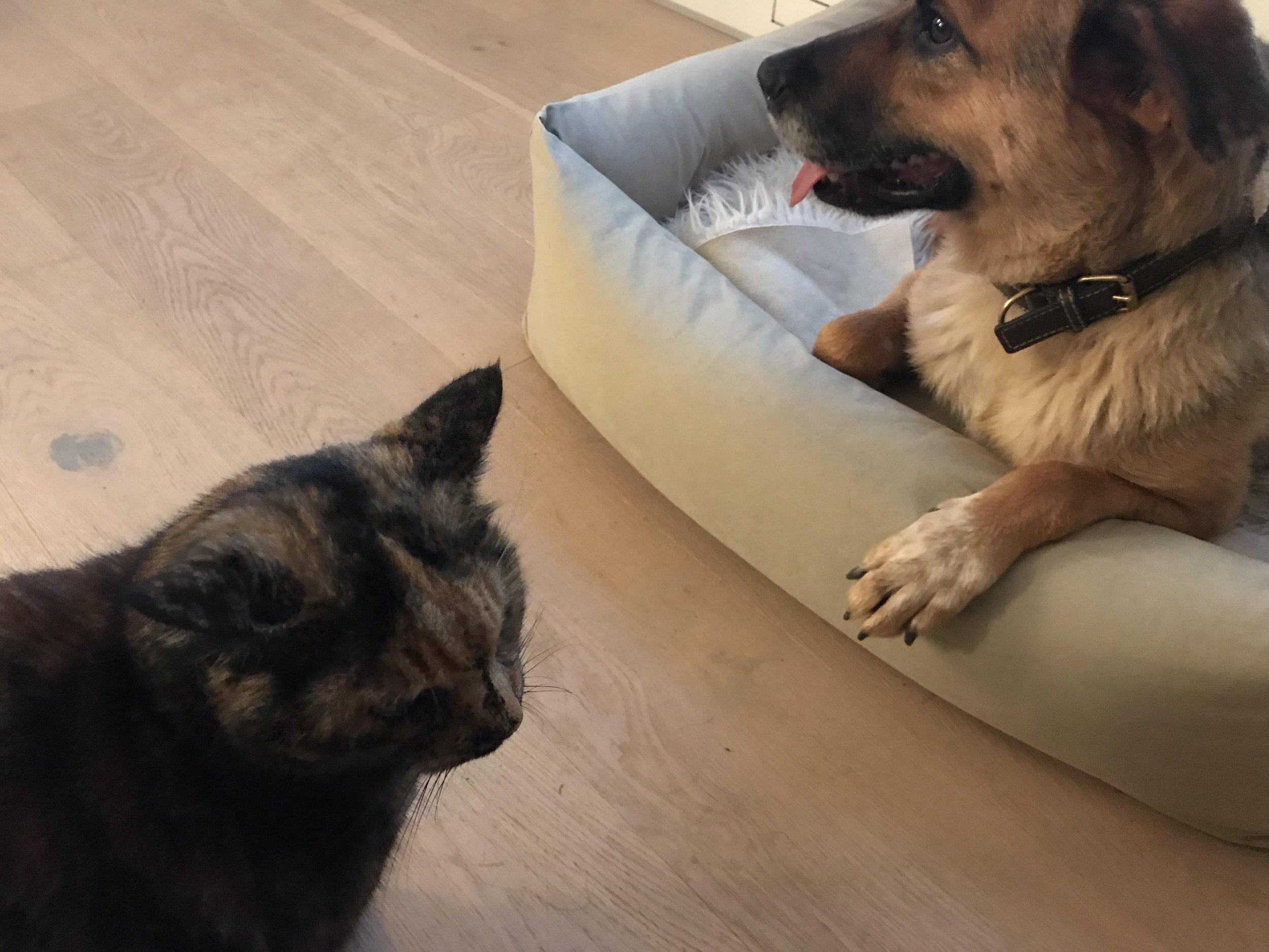 Snoopy et le chat 11/18