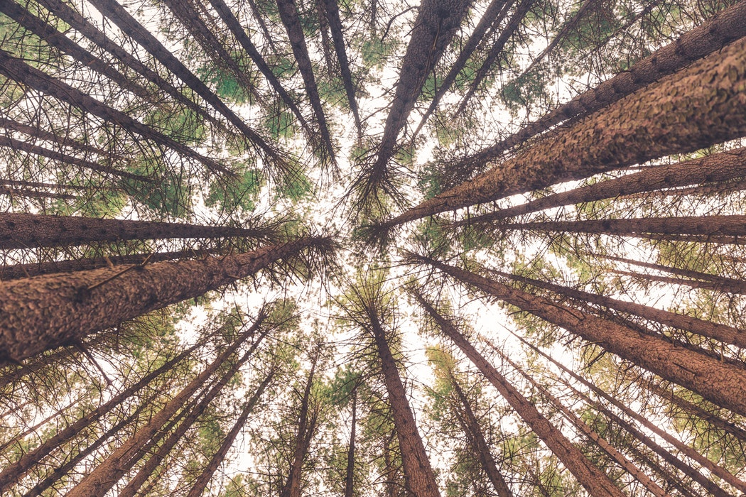 trees in a circle.jpg