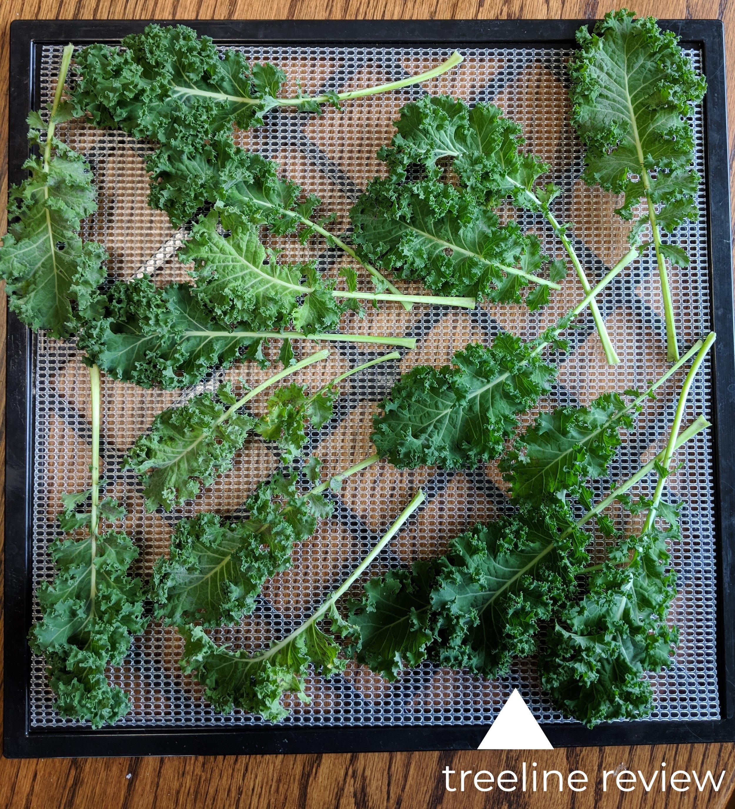 Preparing to dry kale leaves.   Photo by Liz Thomas