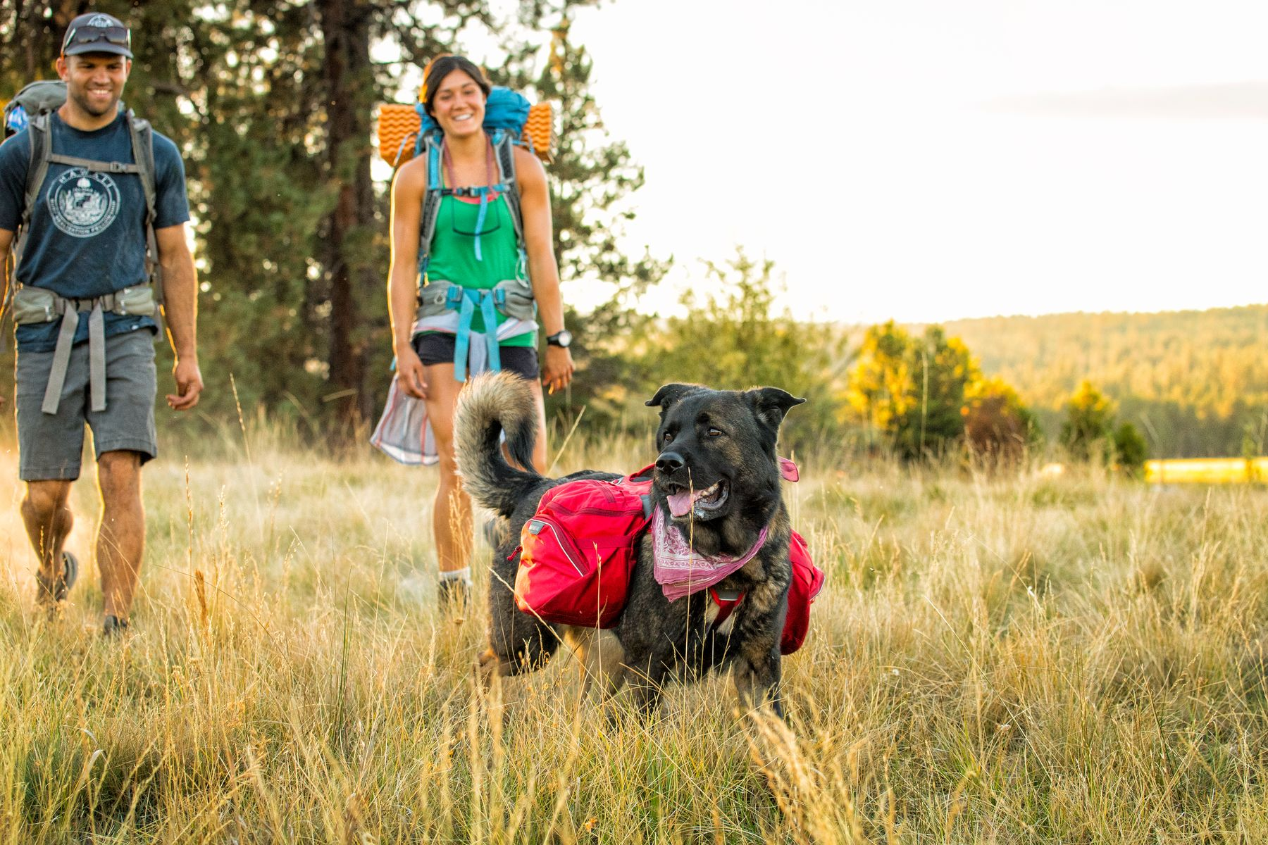 The Palisades fits medium to large dogs well.