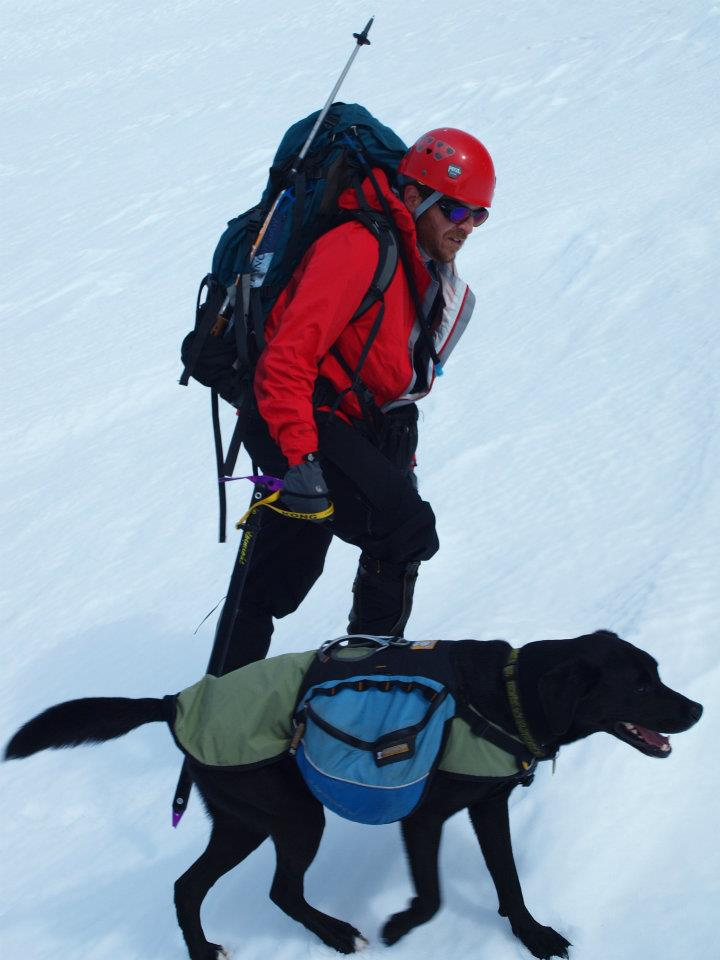 A dog wearing his Ruffwear pack climbing a snow covered hillside.