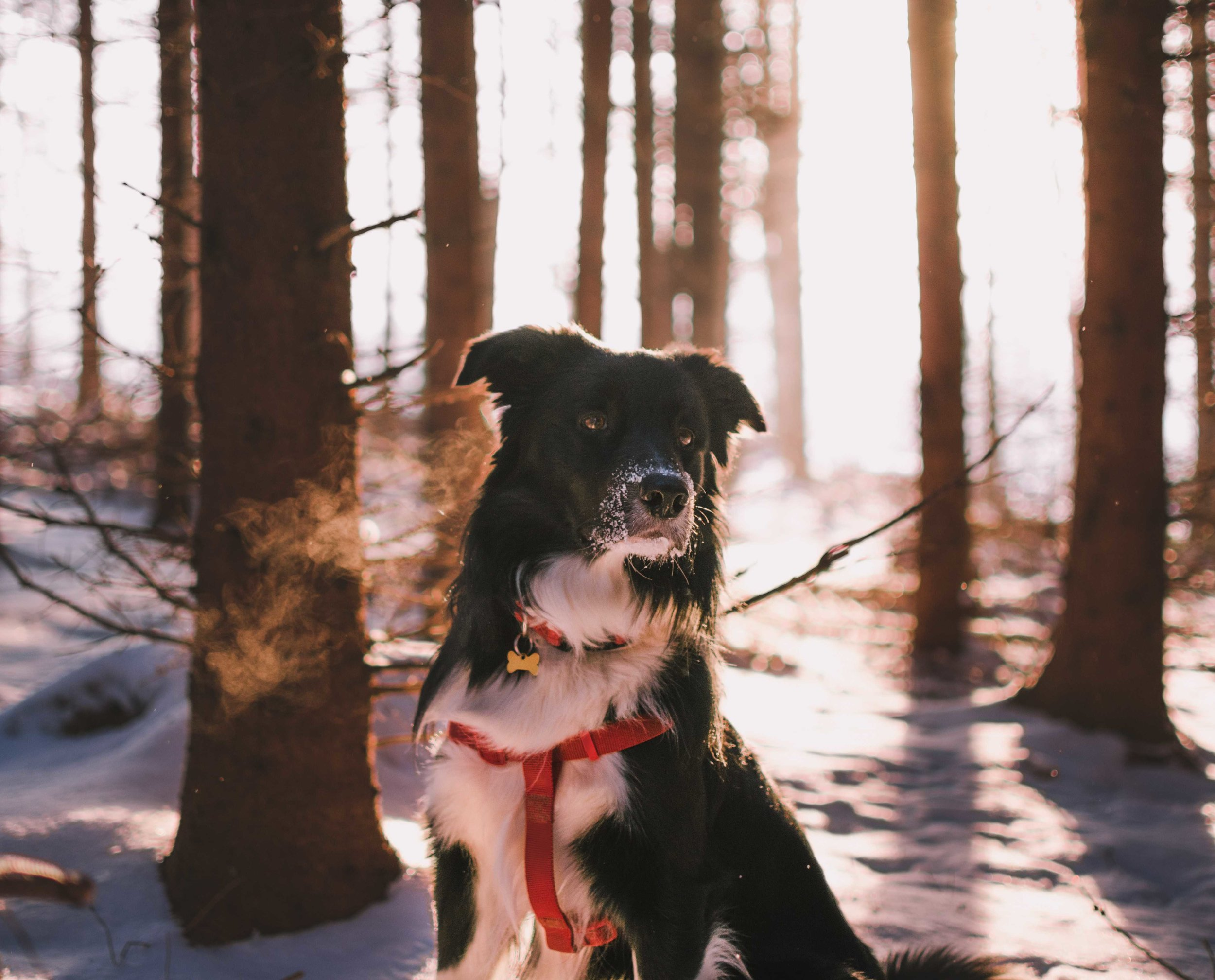 When sizing your dog for a backpack, don't just go by the recommended weight.   Photo by    Tadeusz Lakota    on    Unsplash