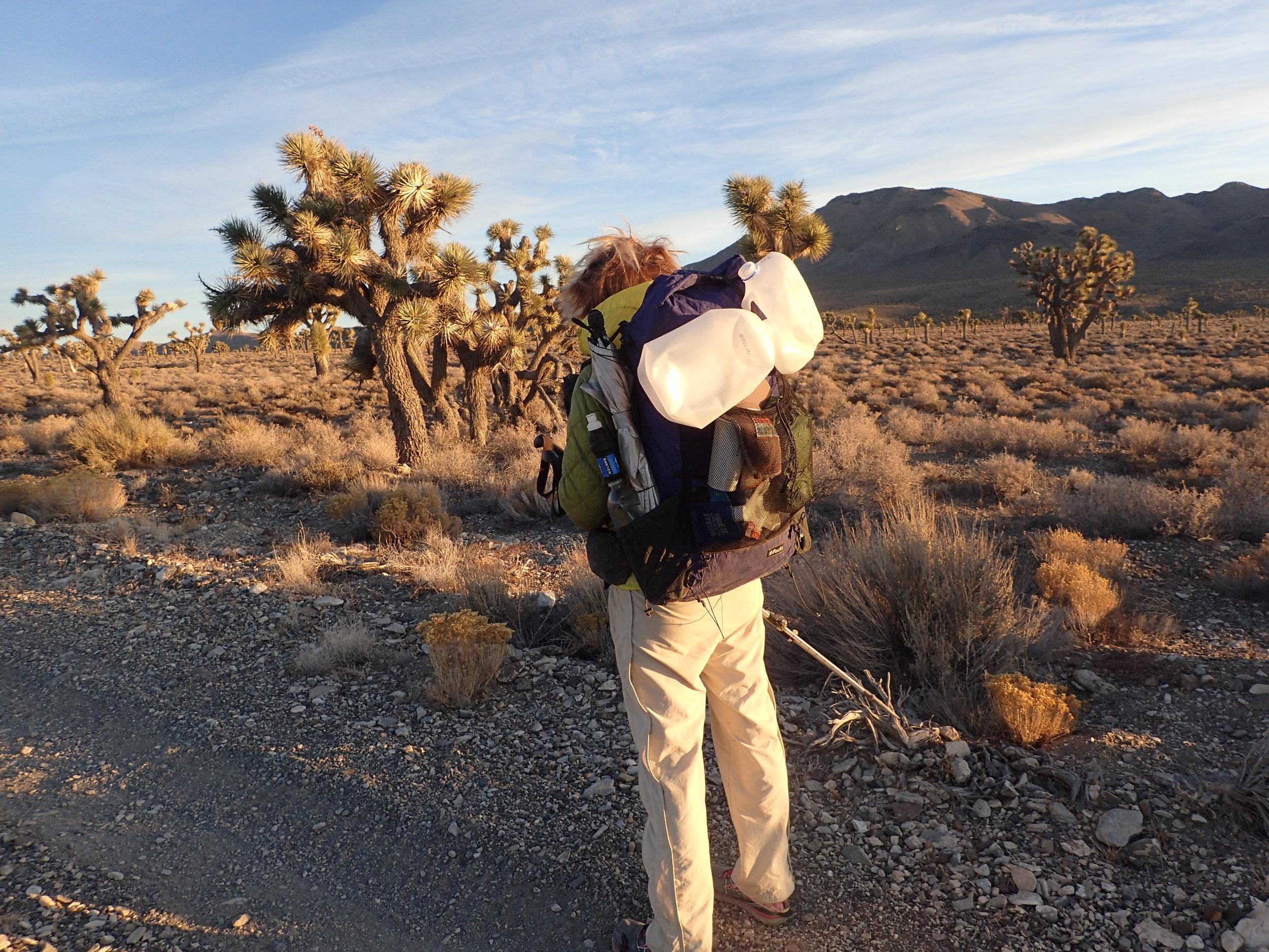 Hiking Pants - Patagonia Quandary PantsRead why→