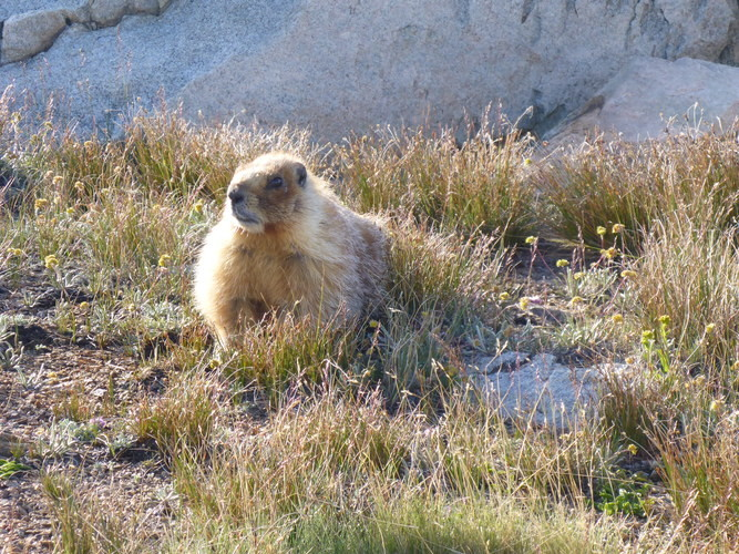 Wildlife photos can be difficult to capture with any point-and-shoot camera. This photo of a marmot in the Sierra near Bishop Pass was taken with a Panasonic Lumix.   Photo by Whitney LaRuffa.