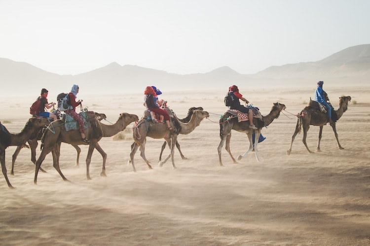 People wearing travel backpacks riding camels through the desert.