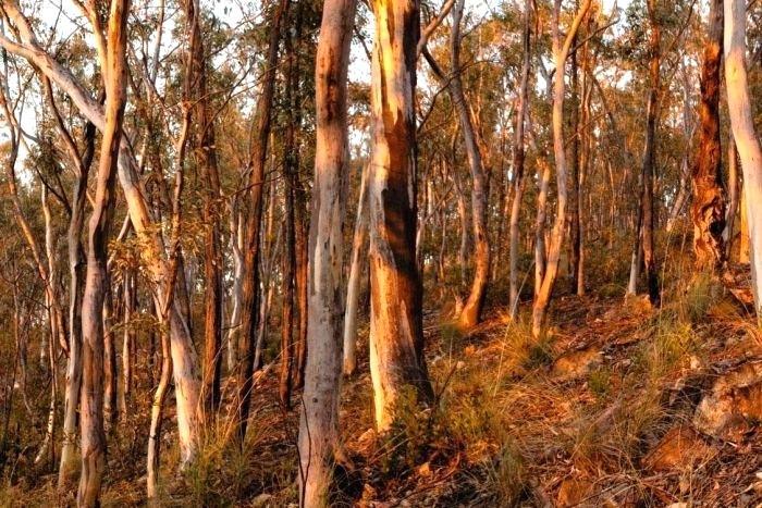 bush-landscape-black-mountain-reserve-bush-landscape-clipart.jpg