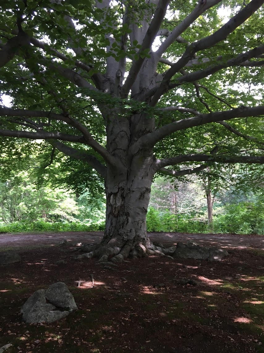 long-hill-tree.JPG