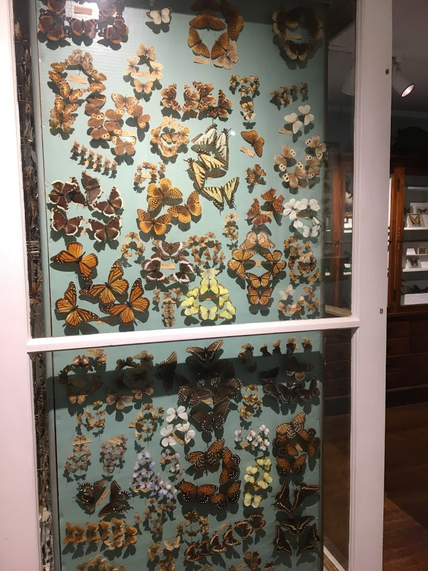 woodman-museum-butterflies.jpg