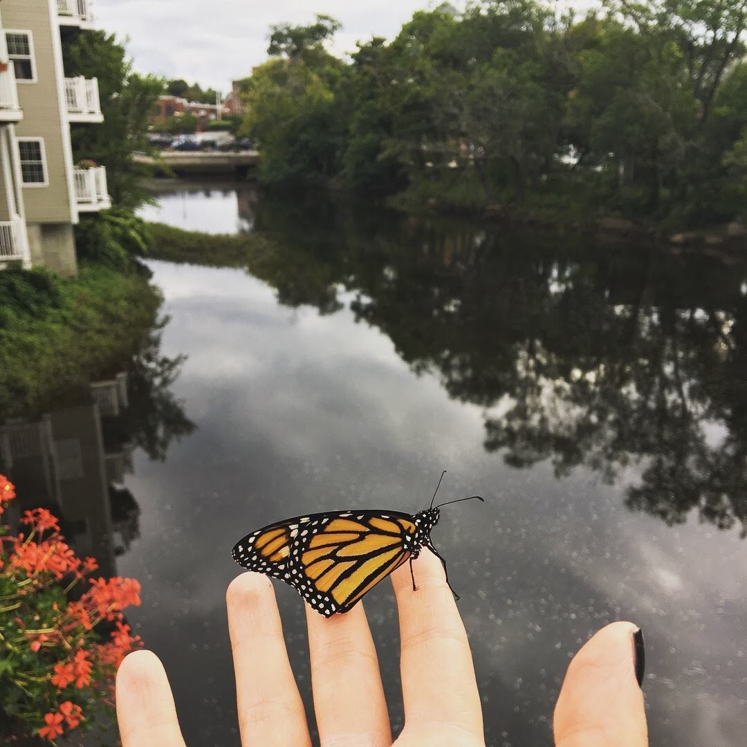 releasing monarch butterfly over the river