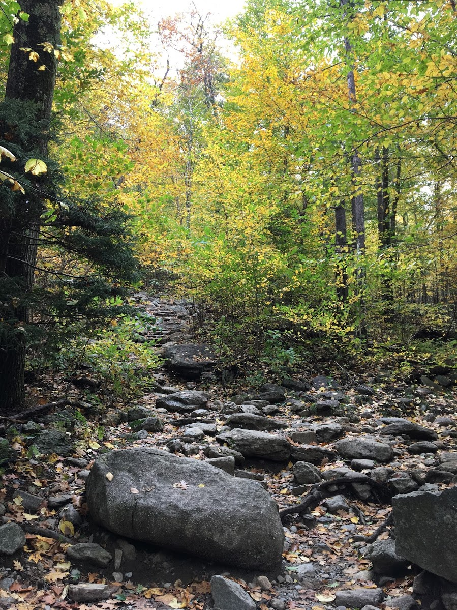 mount-monadnock-forest.JPG
