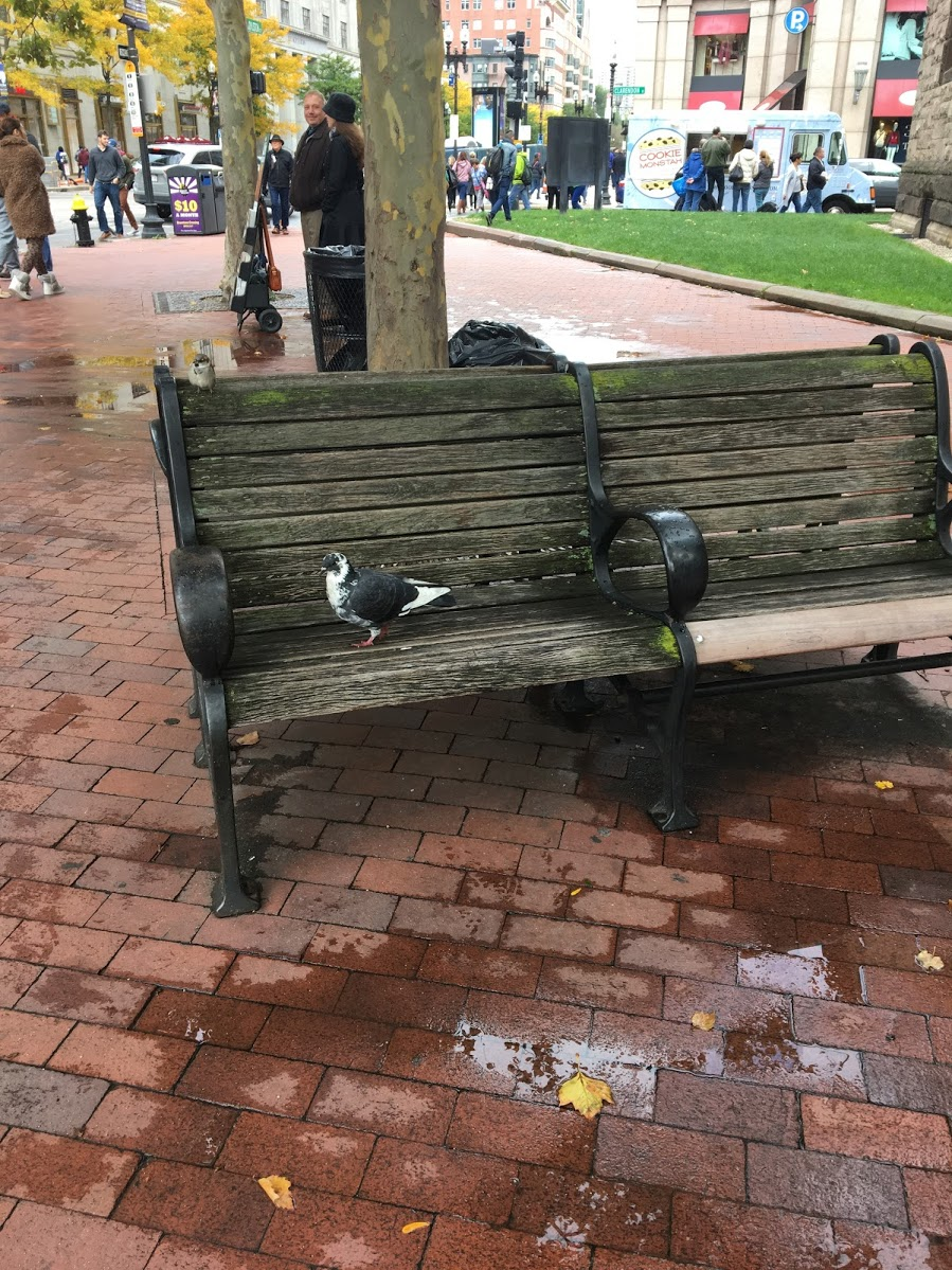 boston-book-fest-2018-pigeon.JPG