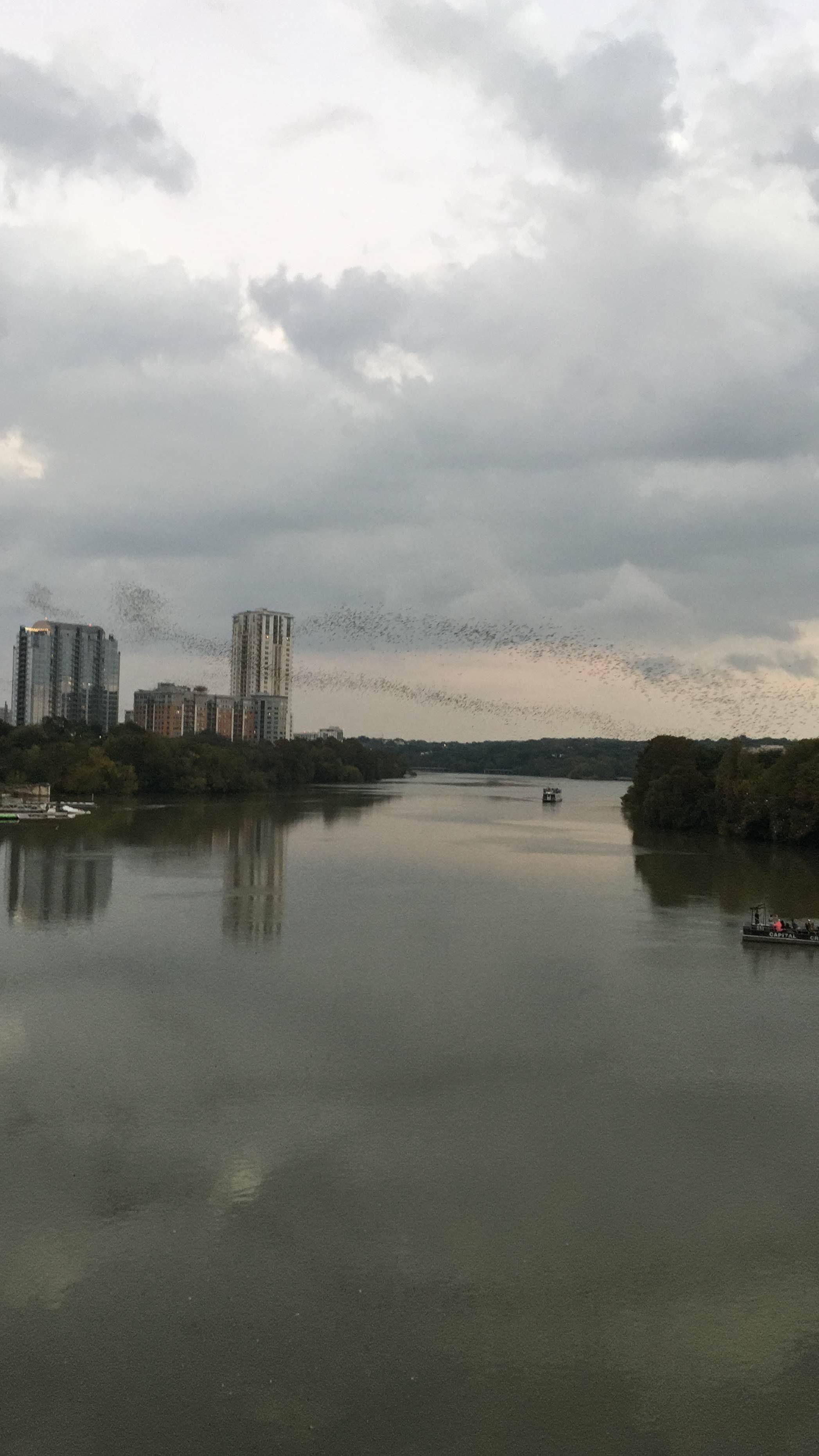 bat-bridge.JPG