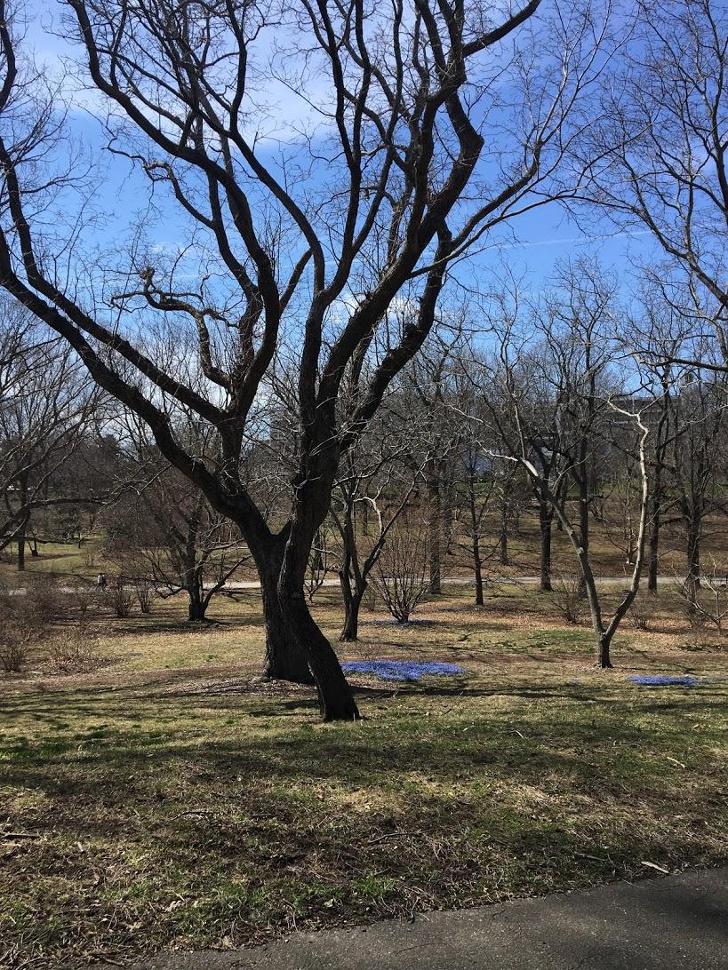 arnold-arboretum-patches.JPG