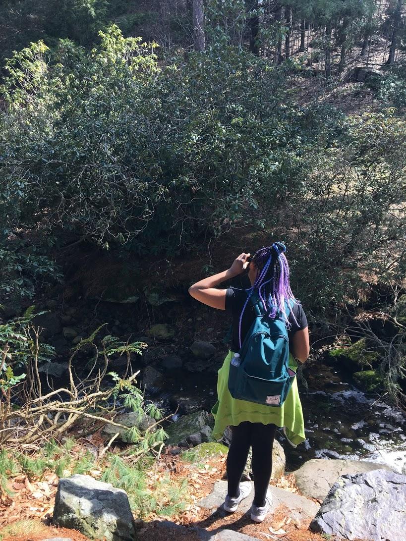 arnold-arboretum-stream.JPG